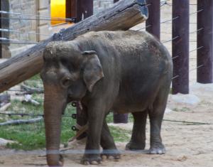 ElephantScratching