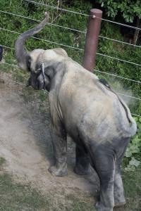 2015_07_25-ElephantBath