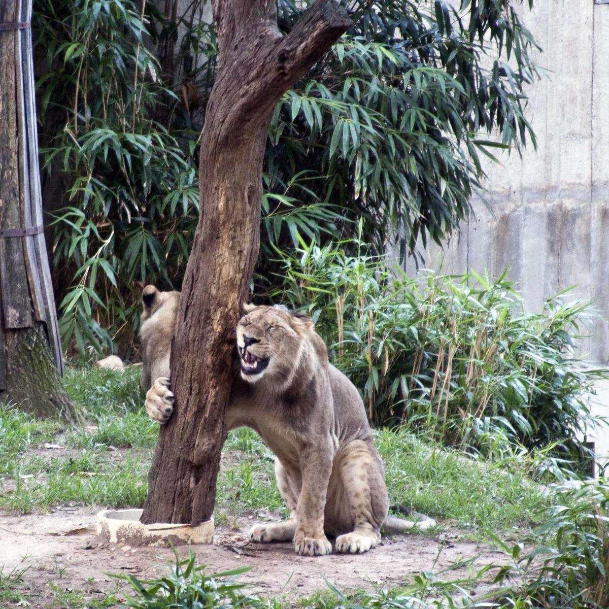 Liontree deals