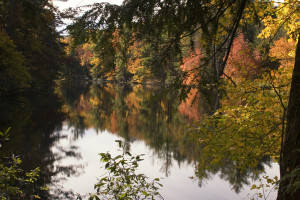 Sandburg-Fall_Colors_1
