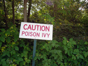Poison ivy caution